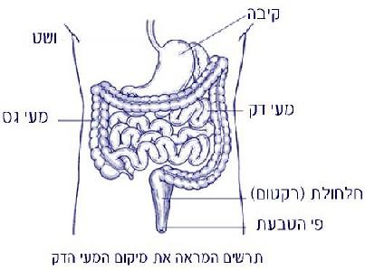 סרטן המעי הדק