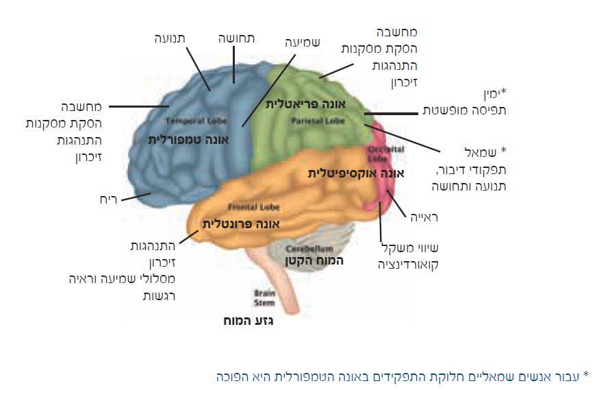 גזע המוח