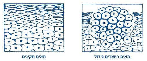 תאים היוצרים גידול ותאים תקינים