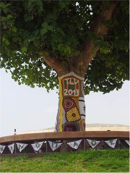 סריגה על  עץ שקמה