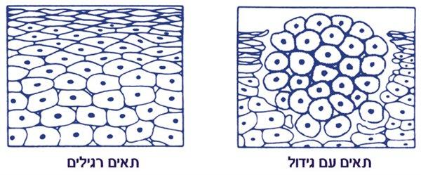 תאי סרטן עם גידול ותאי סרטן רגילים